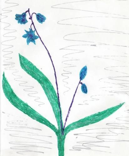 Как нарисовать первоцветы 50